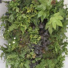 Jardines verticales Innova Jardín estética